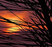 Silhouette Sunset by Tim Scullion
