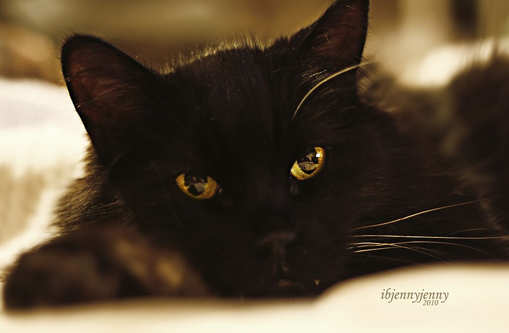 Stray Cat's Prayer..... by ibjennyjenny