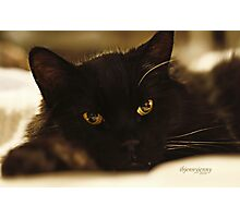 Stray Cat's Prayer..... Photographic Print