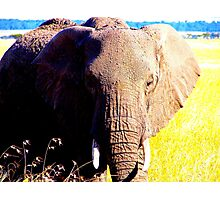 elefant Photographic Print