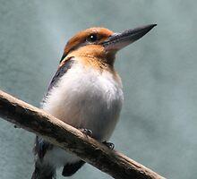I am a King... A Kingfisher I mean! by ZeeZeeshots