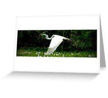 Great Egret - Brazos Bend State Park Greeting Card
