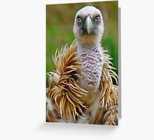 Griffon vulture Greeting Card