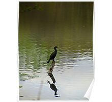Bird on the Water Poster