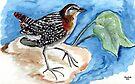Witvlerkvleikuiken / Whitewinged flufftail by Elizabeth Kendall