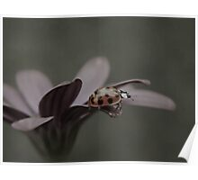 My Fair Ladybug Poster
