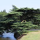 Chinese tree by Alan Gillam