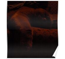 Shhh ... Badgers sleeping Poster