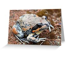 Giant Banjo Frog Greeting Card