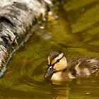 Who Doesn't Love a Duckling? by David Friederich