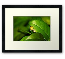 Stretching her wings Framed Print