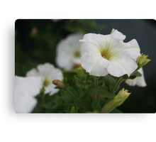 Flower - Home Garden Canvas Print