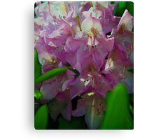 Rhododendrum Canvas Print