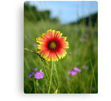 Highway Flower Canvas Print