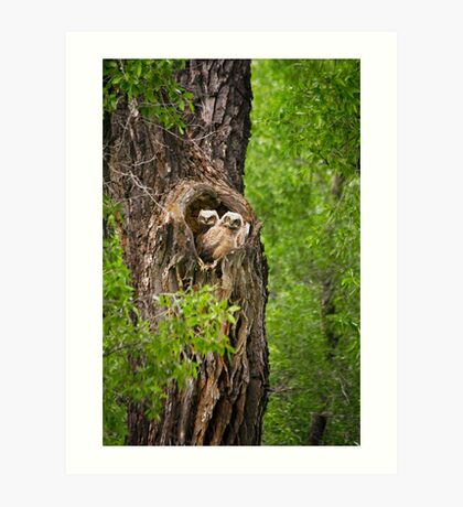 Great-Horned Owlets in Gros Ventre Campground Art Print