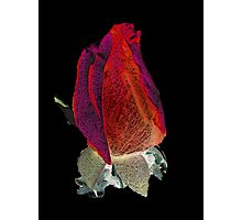 Red it is - Textured Photographic Print