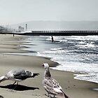FEEDER BIRDS by Paul Quixote Alleyne