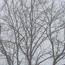 Tree in Winter by Joan Wild
