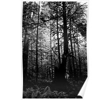 Forest Through the Trees I Poster