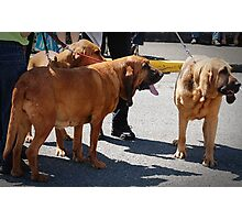 Search And Rescue Dogs Photographic Print