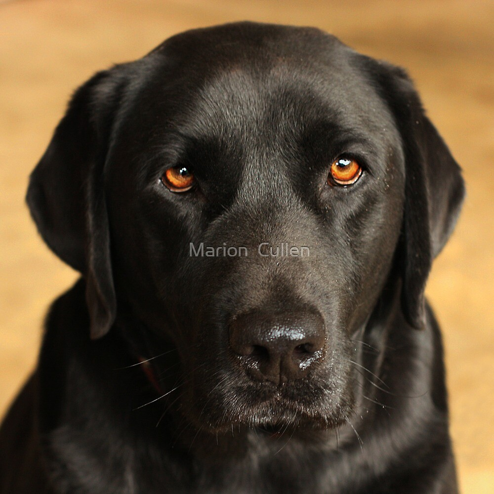 Brown Eyed Boy by Marion  Cullen