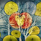Little Green Apples by © Kira Bodensted