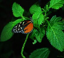 Butterfly at Rest by Mattie Bryant