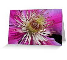Clematis Centre Greeting Card
