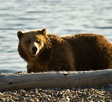 Grizzly Bear   #4225 by JL Woody Wooden