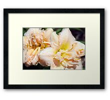 Lily and Rain Drops Framed Print