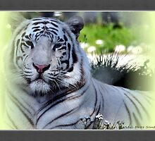 """White Tiger 4"" by Maj-Britt Simble"