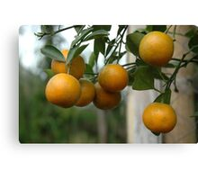 orange tree Canvas Print