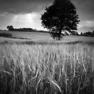Ripening by James Coard