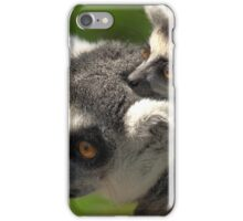 Ring-tailed Lemur with Baby iPhone Case/Skin