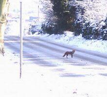 Fox in the Snow by DeneWest