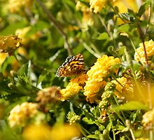 Butterfly on Yellow Lantana by TeAnne