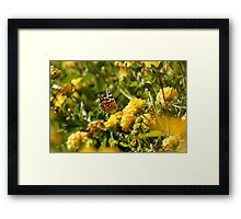 Butterfly on Yellow Lantana 2 Framed Print