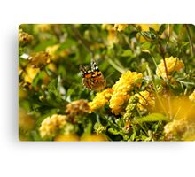 Butterfly on Yellow Lantana 2 Canvas Print