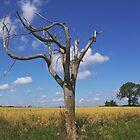 Dead Tree by rokudan