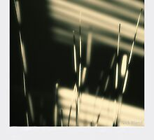 Impossible Project by Nick Bland