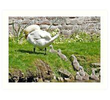 Swan and Cygnets Art Print