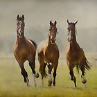 The Young Ones by LarsvandeGoor