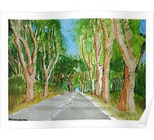 Tree Passage Poster