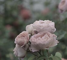 Bouquet of pale pink roses by Lena127