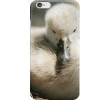 Cygnet on Nest iPhone Case/Skin