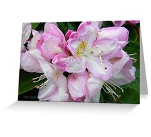 Pale Pink Rhododendron Greeting Card
