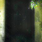 Hidden Doorway - Malmsbury by Daisy-May