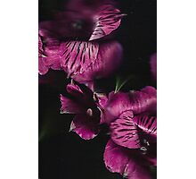Belle Flowe Photographic Print