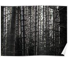 Trees amongst the light Poster