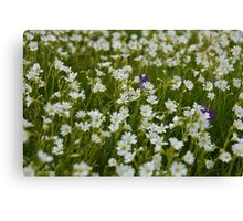 Little White Flowers Canvas Print